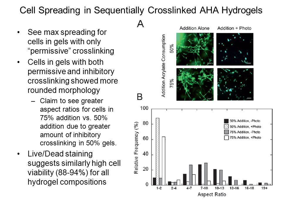 Cell Spreading in Sequentially Crosslinked AHA Hydrogels See max spreading for cells in gels with only permissive crosslinking Cells in gels with both permissive and inhibitory crosslinking showed more rounded morphology –Claim to see greater aspect ratios for cells in 75% addition vs.