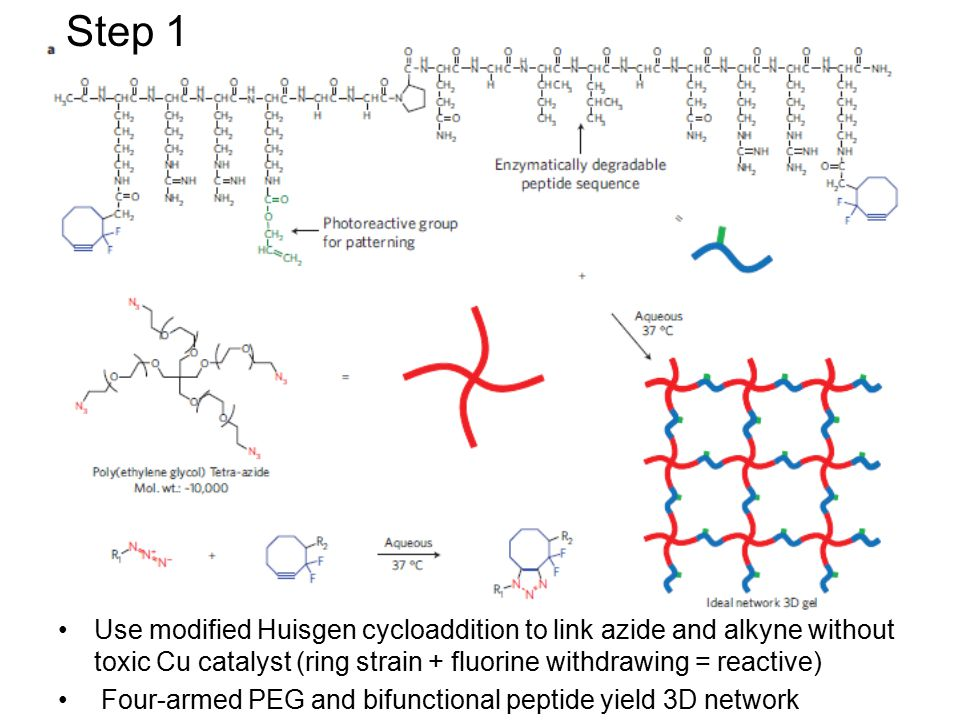 Use modified Huisgen cycloaddition to link azide and alkyne without toxic Cu catalyst (ring strain + fluorine withdrawing = reactive) Four-armed PEG and bifunctional peptide yield 3D network Step 1