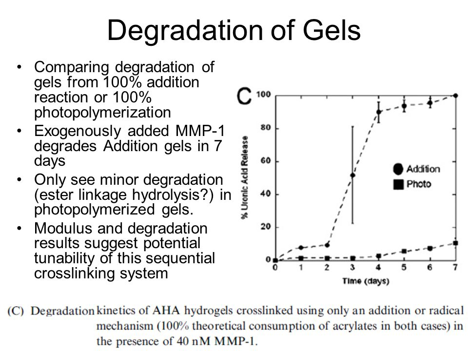 Degradation of Gels Comparing degradation of gels from 100% addition reaction or 100% photopolymerization Exogenously added MMP-1 degrades Addition gels in 7 days Only see minor degradation (ester linkage hydrolysis?) in photopolymerized gels.