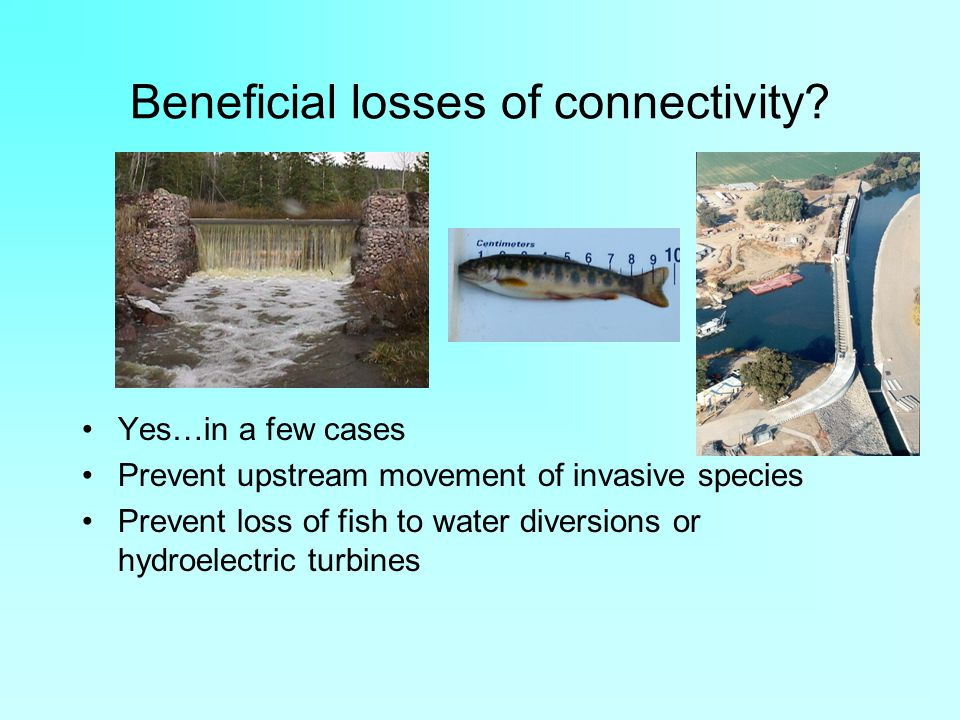 Beneficial losses of connectivity? Yes…in a few cases Prevent upstream movement of invasive species Prevent loss of fish to water diversions or hydroe