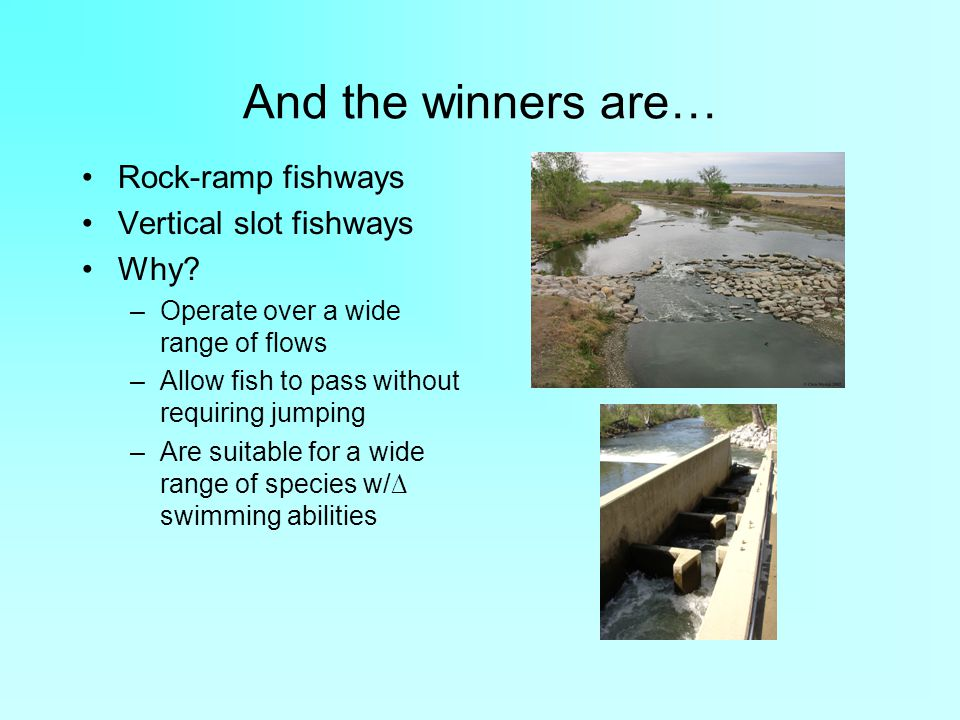 And the winners are… Rock-ramp fishways Vertical slot fishways Why.