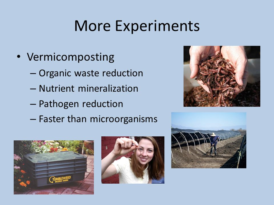 More Experiments Vermicomposting – Organic waste reduction – Nutrient mineralization – Pathogen reduction – Faster than microorganisms