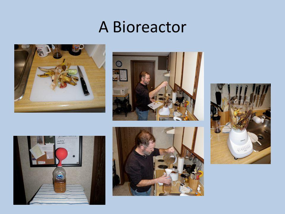 A Bioreactor