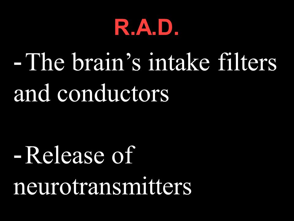 - The brain's intake filters and conductors - Release of neurotransmitters. R.A.D.