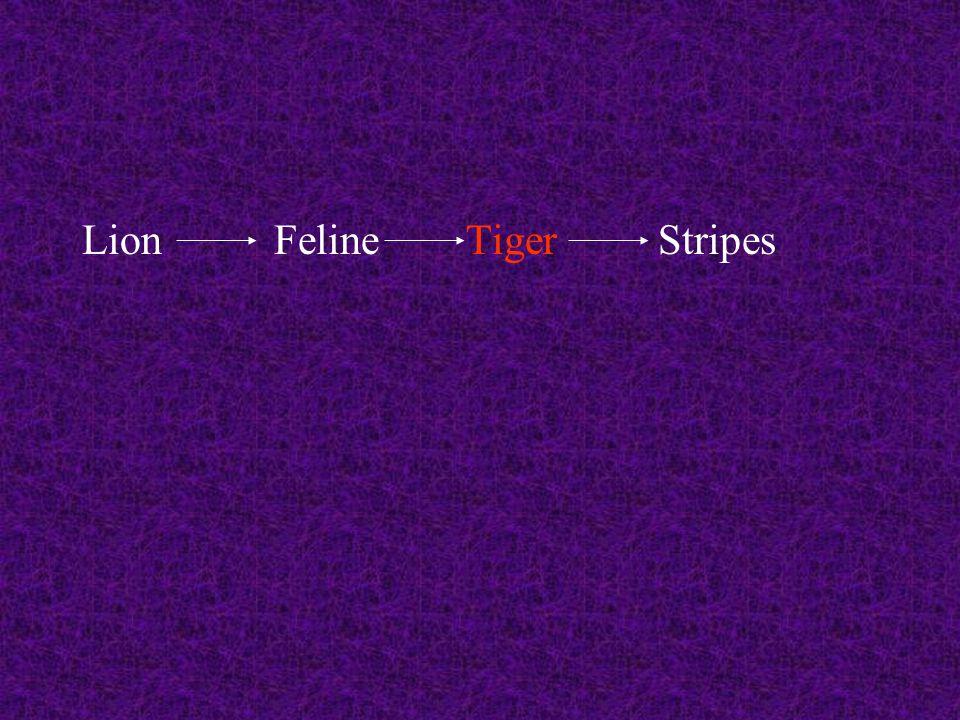 LionFelineTigerStripes