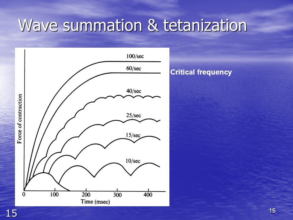 15 15 Wave summation & tetanization Critical frequency