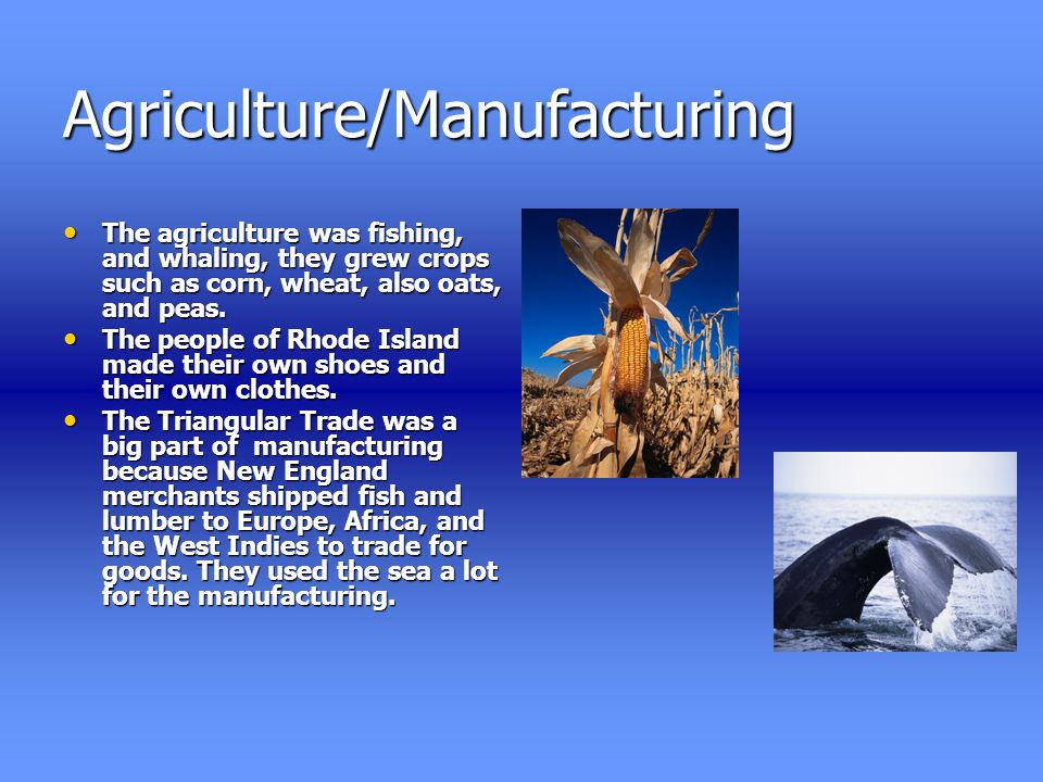 Agriculture/Manufacturing The agriculture was fishing, and whaling, they grew crops such as corn, wheat, also oats, and peas.