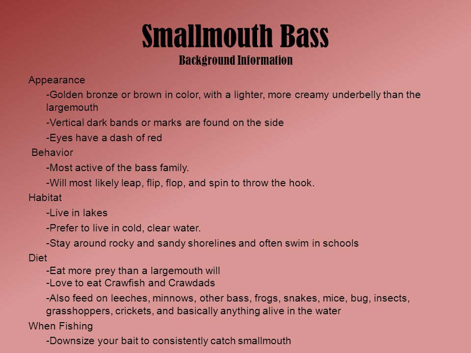 Smallmouth Bass Background Information Appearance -Golden bronze or brown in color, with a lighter, more creamy underbelly than the largemouth -Vertic