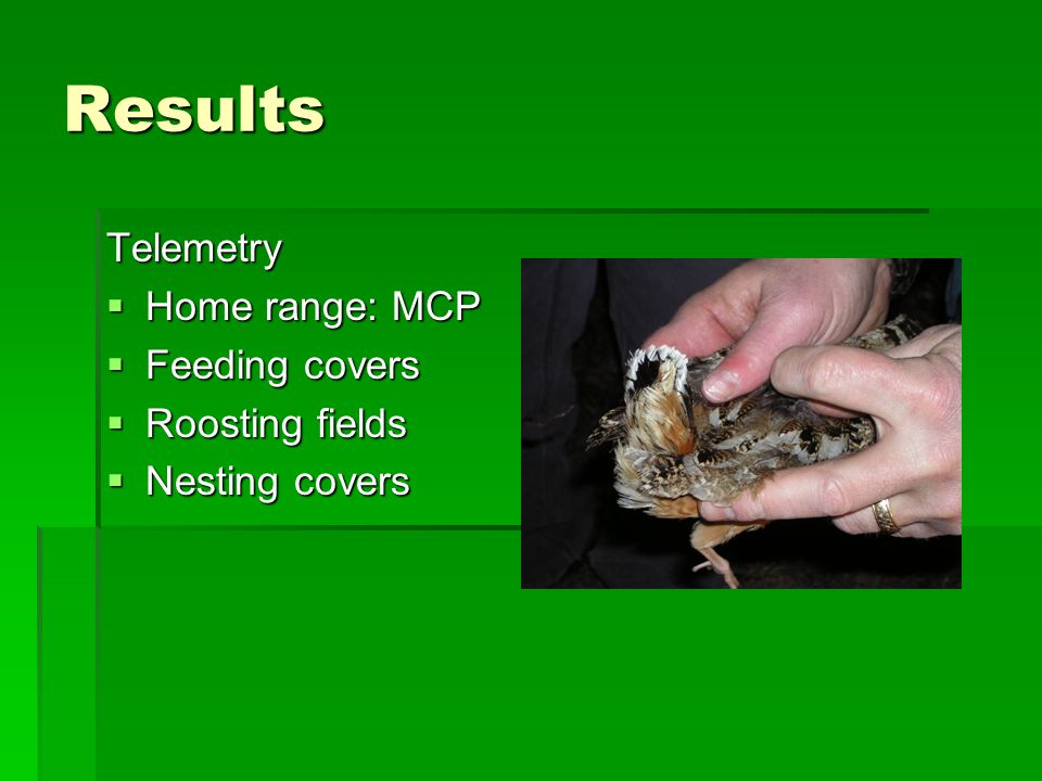 Results Telemetry  Home range: MCP  Feeding covers  Roosting fields  Nesting covers