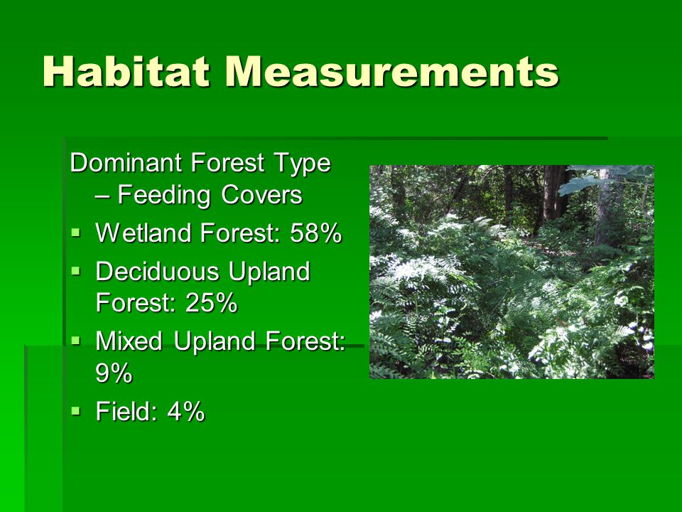 Habitat Measurements Dominant Forest Type – Feeding Covers  Wetland Forest: 58%  Deciduous Upland Forest: 25%  Mixed Upland Forest: 9%  Field: 4%