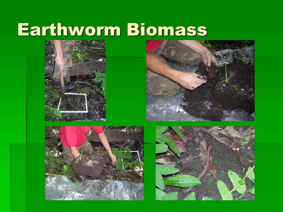 Earthworm Biomass