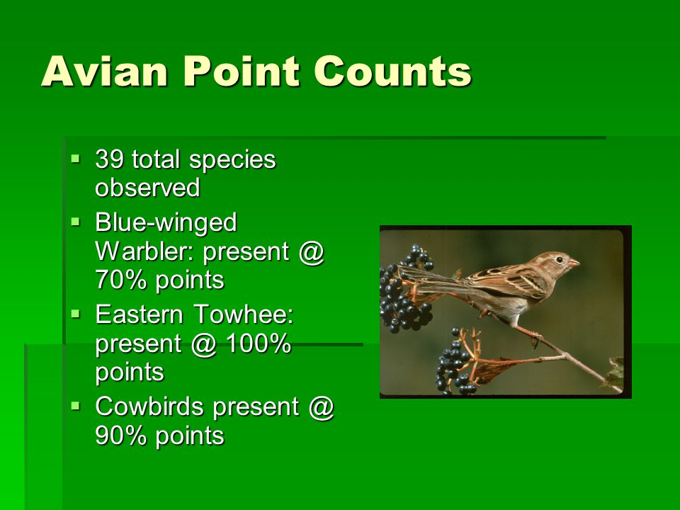 Avian Point Counts  39 total species observed  Blue-winged Warbler: present @ 70% points  Eastern Towhee: present @ 100% points  Cowbirds present @ 90% points
