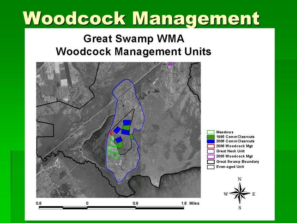 Woodcock Management