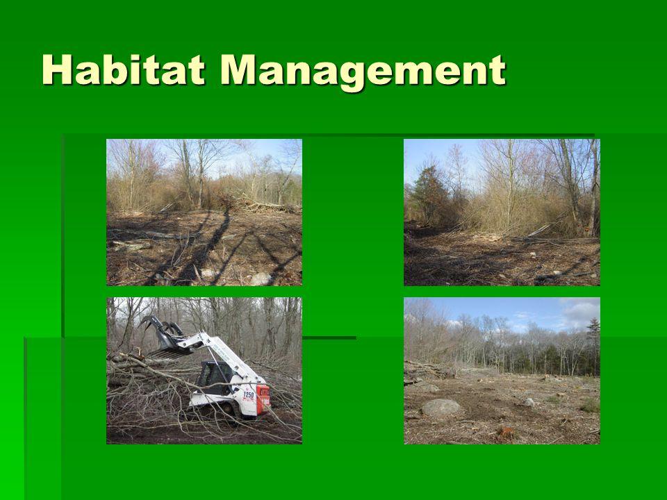 Habitat Measurements  Stem density In HR: Average: 95,125 stems/ha Range 71,250 – 116,500 Out HR: Average: 84,583 stems/ha Range: 41,667-210,000