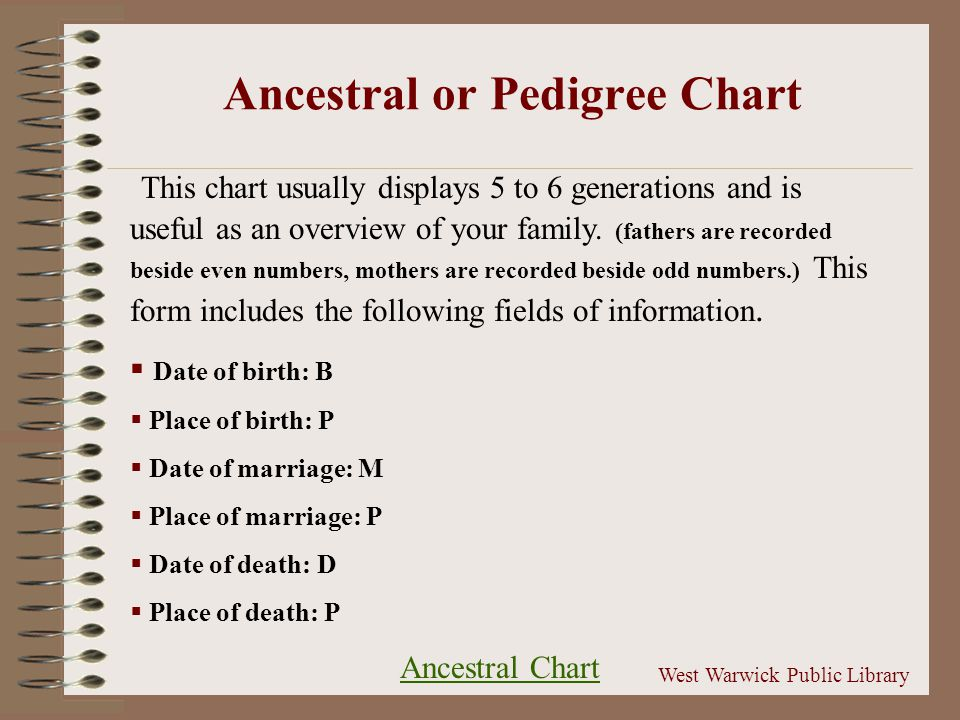 This chart usually displays 5 to 6 generations and is useful as an overview of your family.