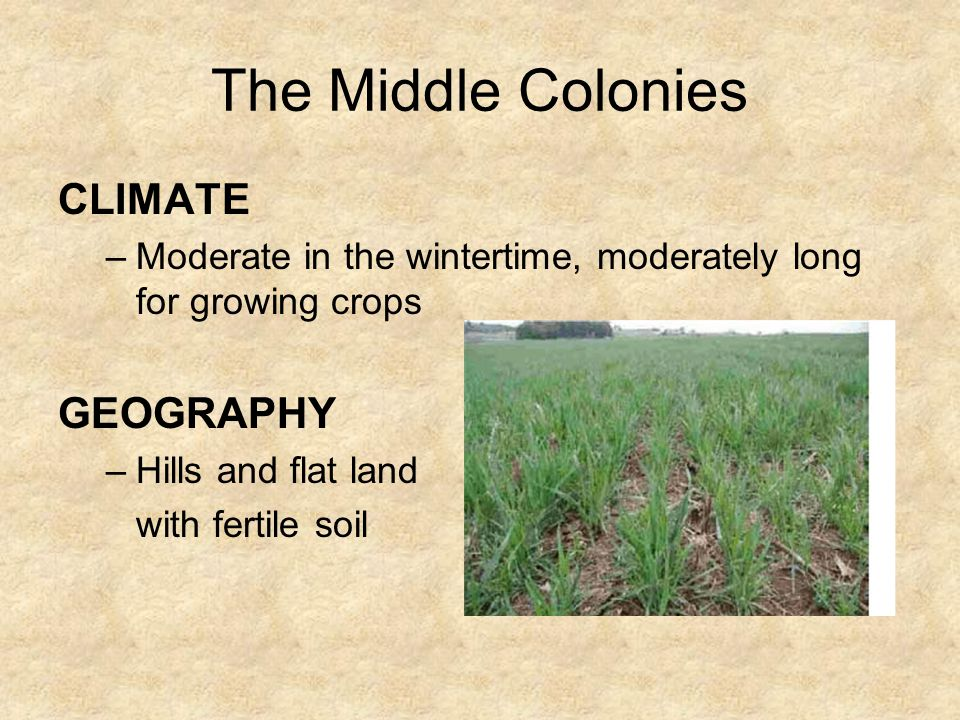 The Middle Colonies The middle colonies unlike the other colonies had settlers from all different countries: »Europe »Germany »Holland »Sweden Henry H