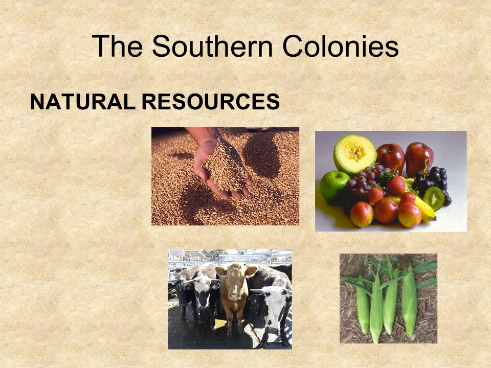 Life in the Southern Colonies There were few towns in the southern colonies, but several times a year families living on plantations would travel to t