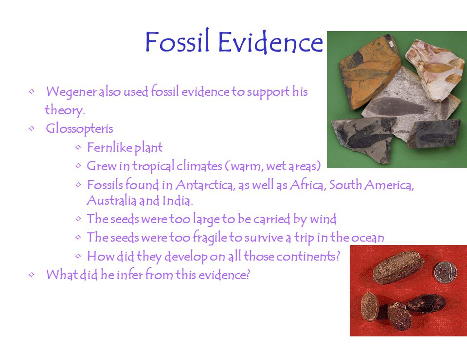 Fossil Evidence Wegener also used fossil evidence to support his theory.