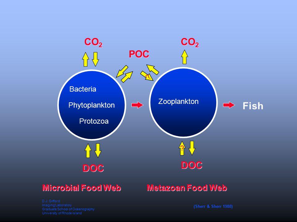 Phytoplankton Microbial Food Web Metazoan Food Web CO 2 DOC Protozoa Bacteria Zooplankton .