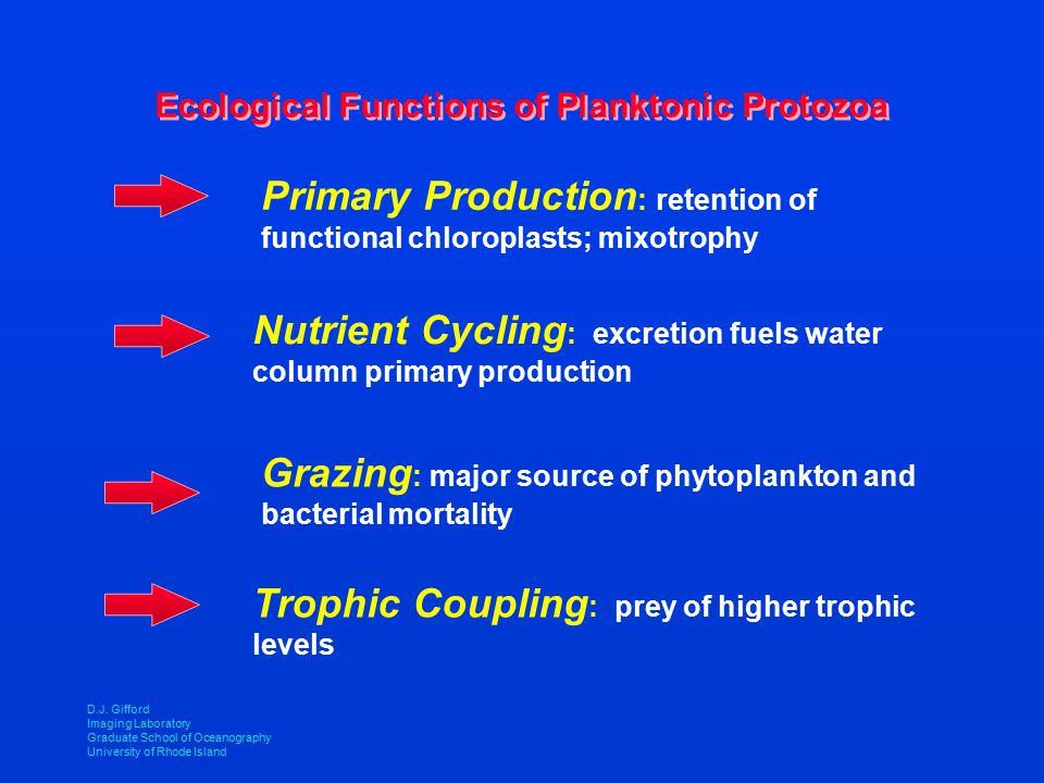 Ecological Functions of Planktonic Protozoa Primary Production : retention of functional chloroplasts; mixotrophy Nutrient Cycling : excretion fuels w