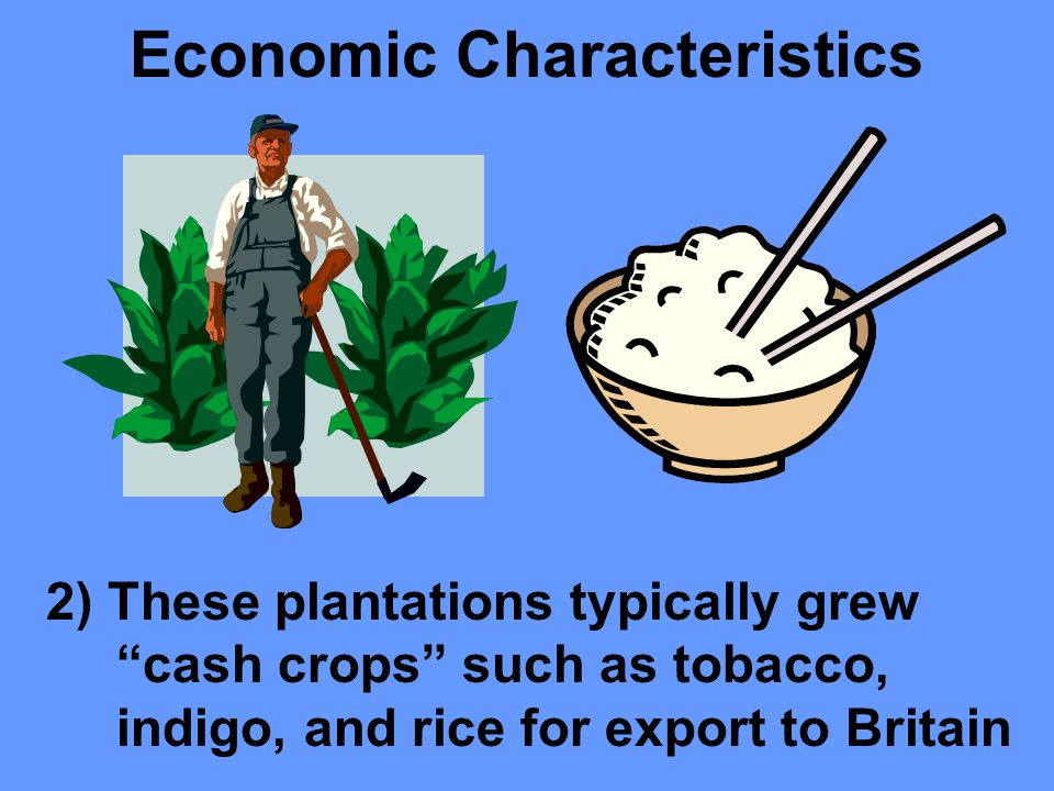 Economic Characteristics 1) Virginia and the other Southern colonies developed economies in the Eastern coastal lowlands based on large plantations