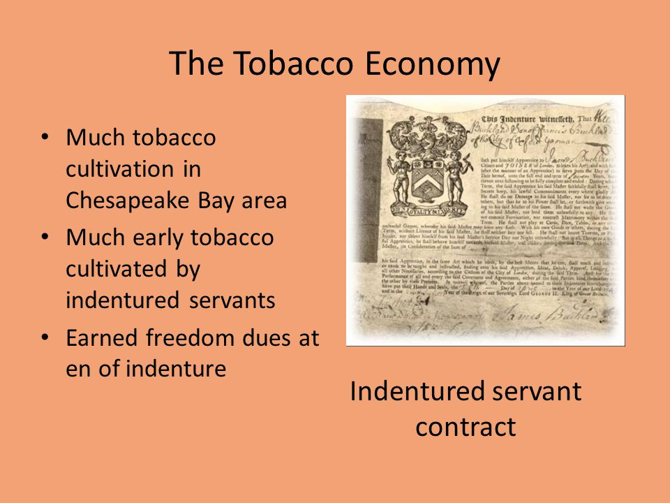 The Tobacco Economy Much tobacco cultivation in Chesapeake Bay area Much early tobacco cultivated by indentured servants Earned freedom dues at en of indenture Indentured servant contract