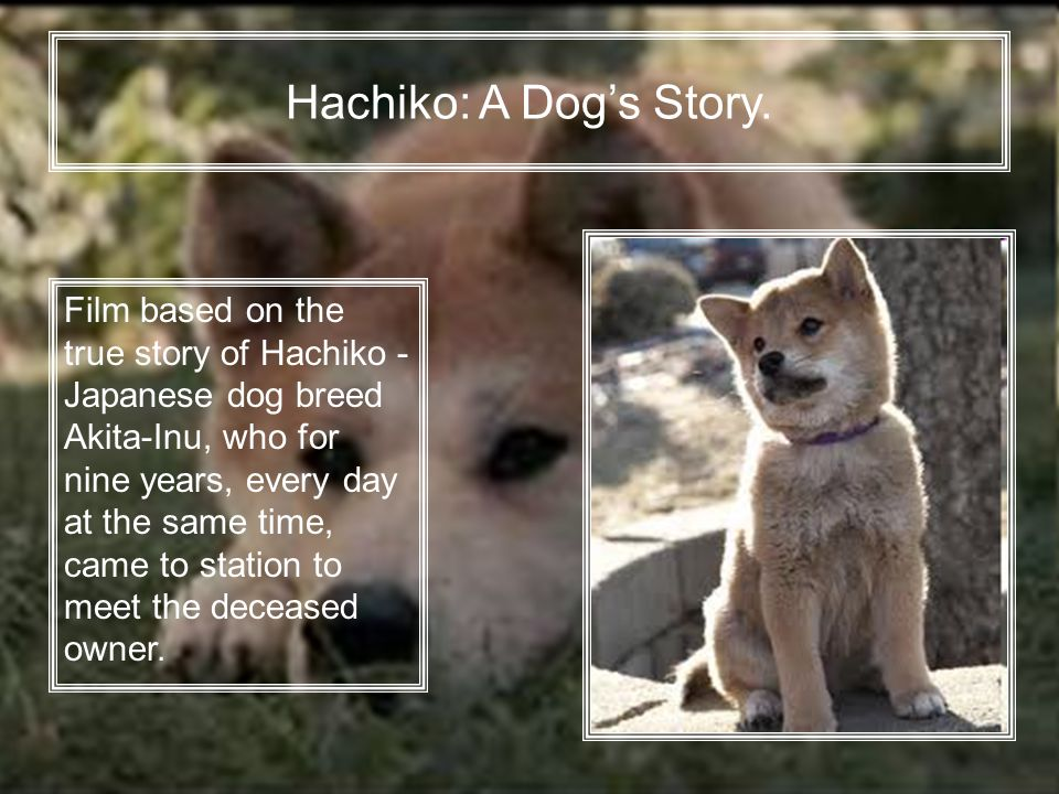 Hachiko: A Dog's Story.