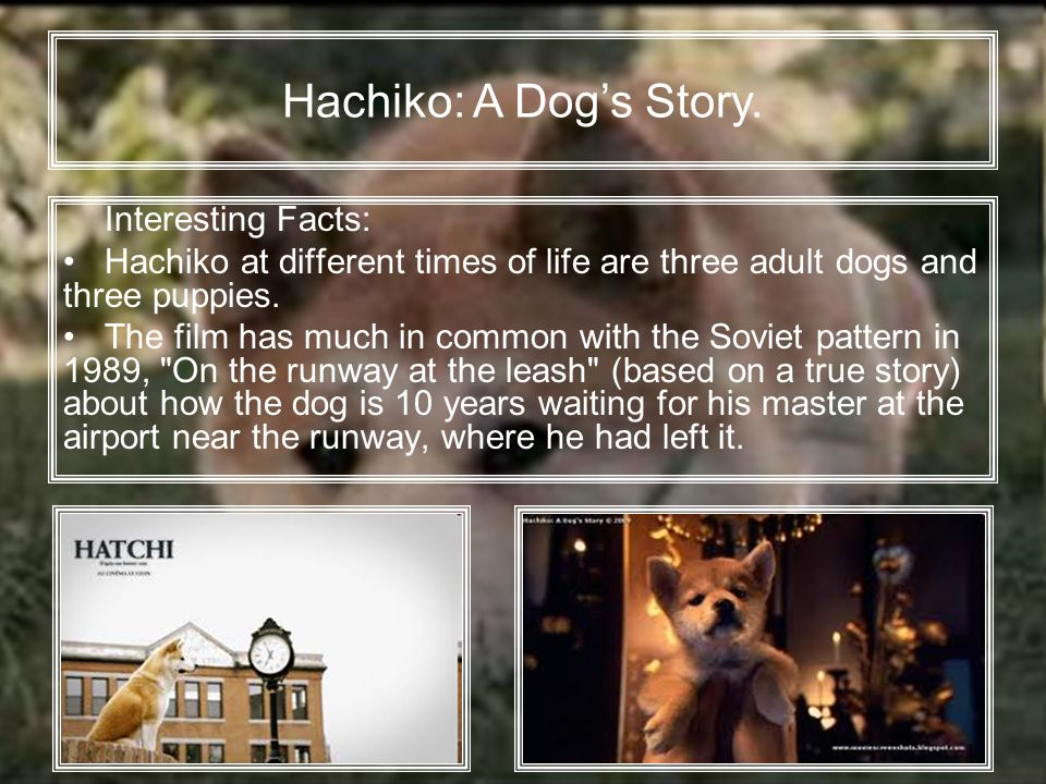 Interesting Facts: Hachiko at different times of life are three adult dogs and three puppies.