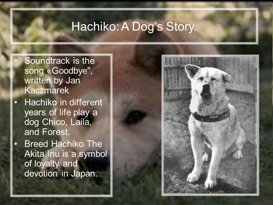 Soundtrack is the song «Goodbye , written by Jan Kaczmarek Hachiko in different years of life play a dog Chico, Laila, and Forest.
