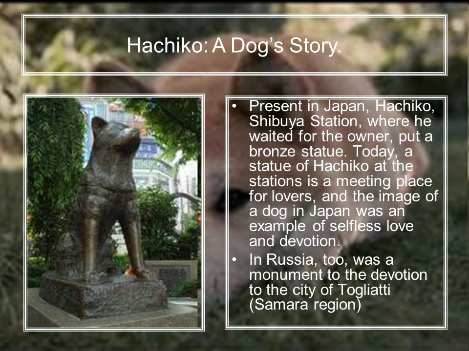 Present in Japan, Hachiko, Shibuya Station, where he waited for the owner, put a bronze statue.