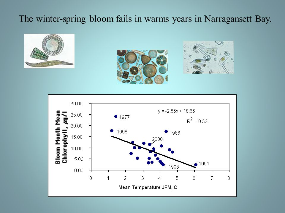 The winter-spring bloom fails in warms years in Narragansett Bay.