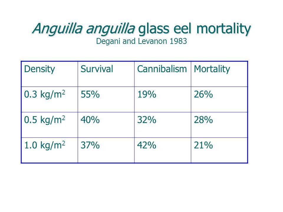 Anguilla anguilla glass eel mortality Anguilla anguilla glass eel mortality Degani and Levanon 1983 DensitySurvivalCannibalismMortality 0.3 kg/m 2 55%19%26% 0.5 kg/m 2 40%32%28% 1.0 kg/m 2 37%42%21%