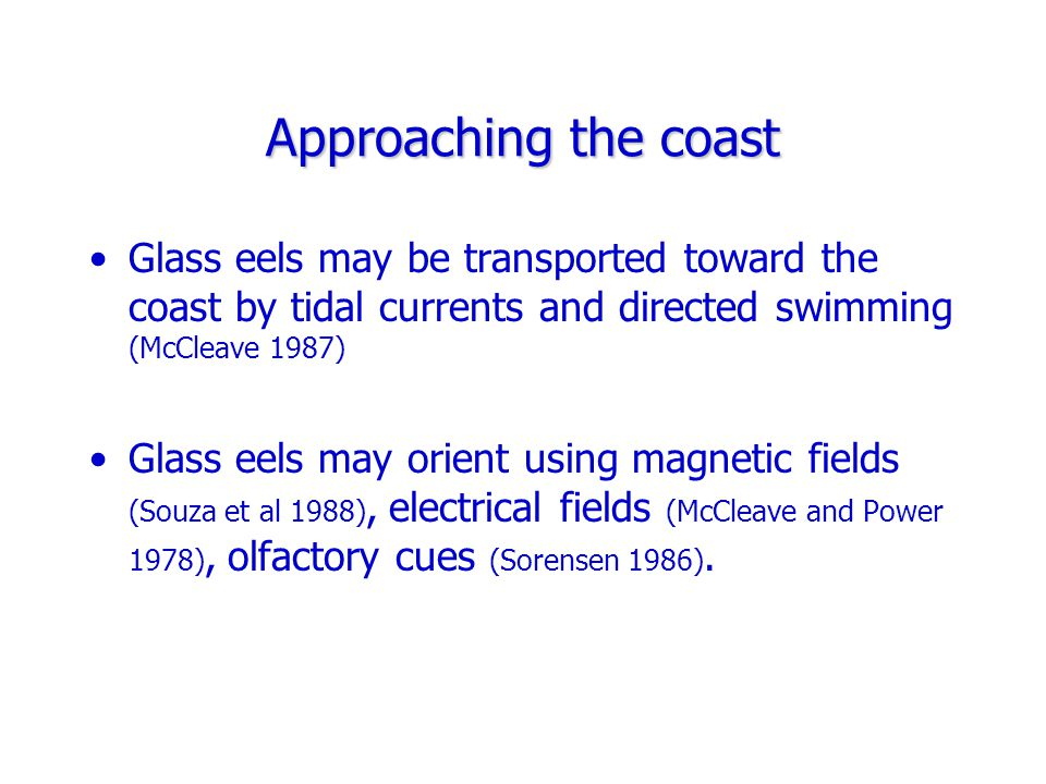 Approaching the coast Glass eels may be transported toward the coast by tidal currents and directed swimming (McCleave 1987) Glass eels may orient using magnetic fields (Souza et al 1988), electrical fields (McCleave and Power 1978), olfactory cues (Sorensen 1986).