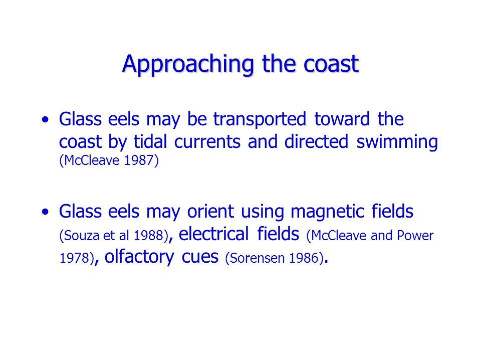 Anguilla rostrata glass eel growth Anguilla rostrata glass eel growth (Jessop 2000) In a coastal river, finite mortality rates were 0.9945 (trap counts) and 0.9968 (mark- recapture).