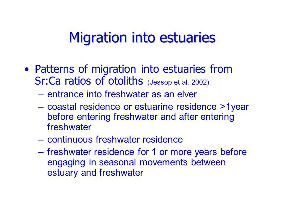Migration into estuaries Patterns of migration into estuaries based on Sr:Ca ratios of otoliths (Cairns et al.