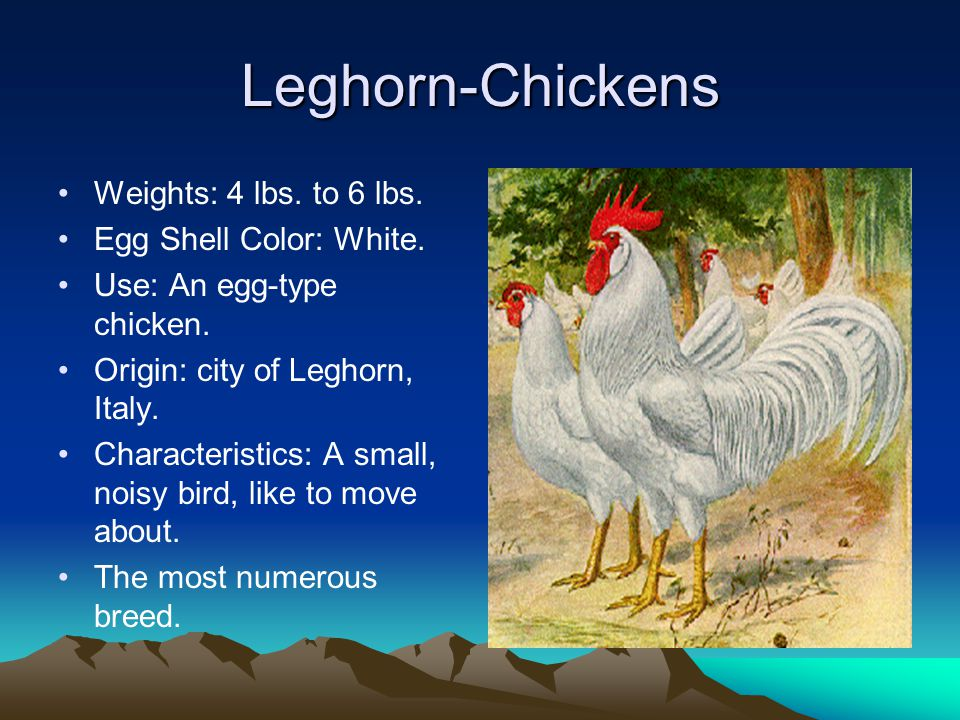 Leghorn-Chickens Weights: 4 lbs.to 6 lbs. Egg Shell Color: White.