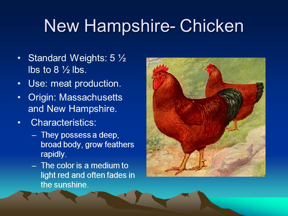 New Hampshire- Chicken Standard Weights: 5 ½ lbs to 8 ½ lbs.