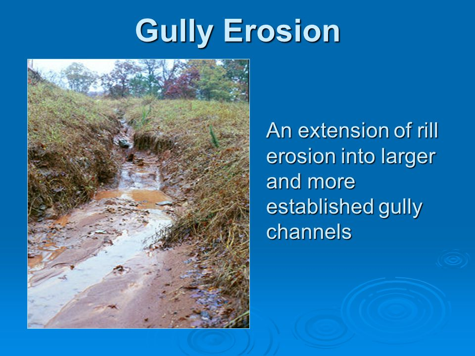 Gully Erosion An extension of rill erosion into larger and more established gully channels