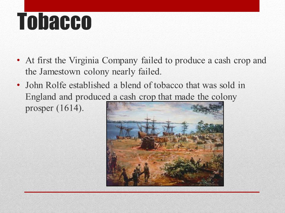 Tobacco At first the Virginia Company failed to produce a cash crop and the Jamestown colony nearly failed. John Rolfe established a blend of tobacco