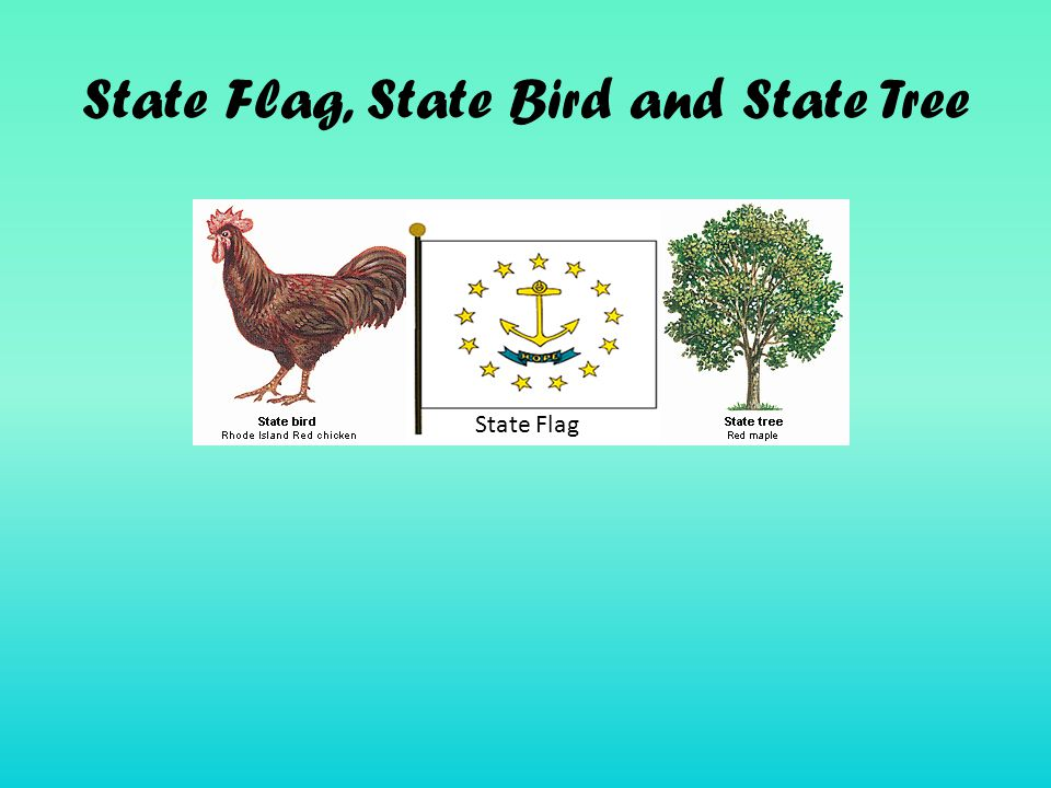 State Flag, State Bird and State Tree State Flag