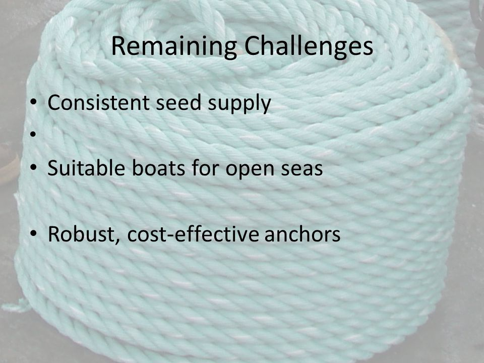 Remaining Challenges Consistent seed supply Suitable boats for open seas Robust, cost-effective anchors