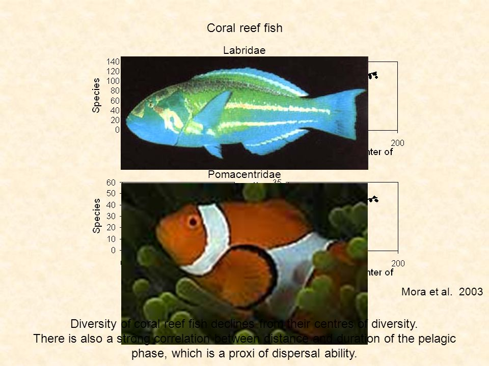 Coral reef fish Labridae Pomacentridae Diversity of coral reef fish declines from their centres of diversity.