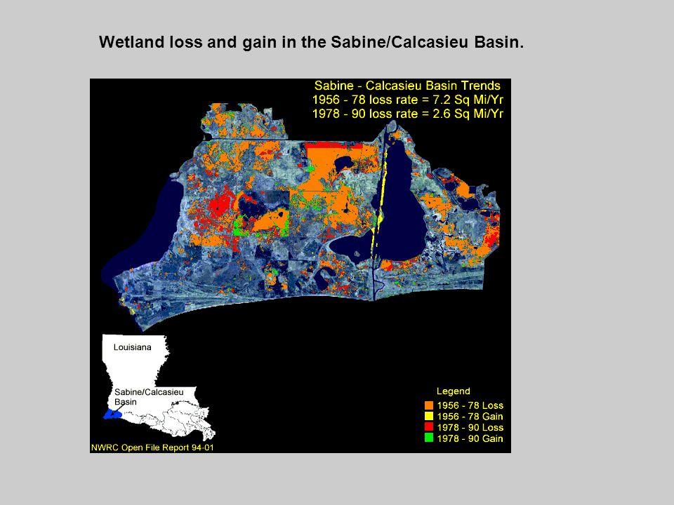 Wetland loss and gain in the Sabine/Calcasieu Basin.