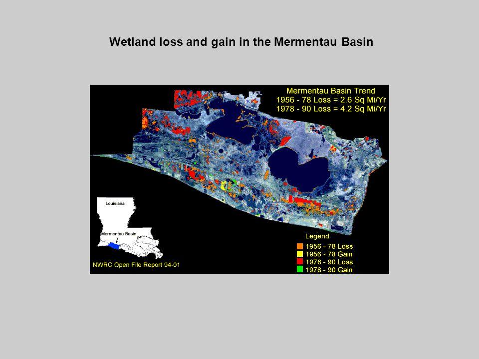 Wetland loss and gain in the Mermentau Basin