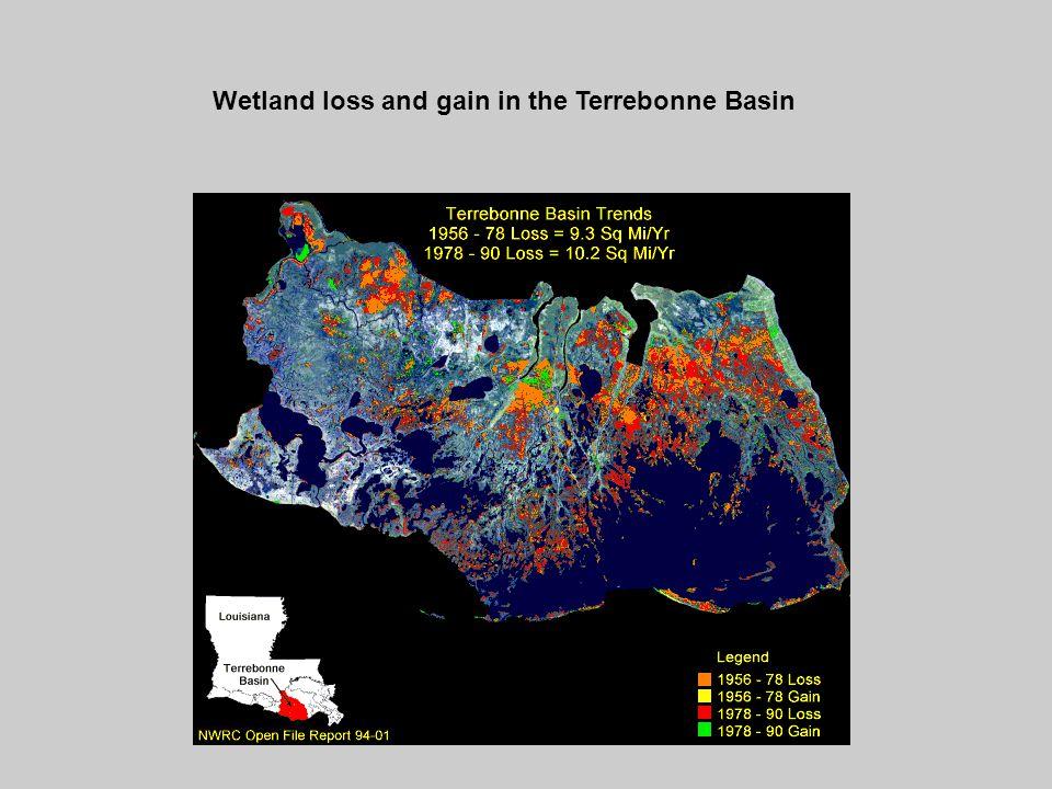 Wetland loss and gain in the Terrebonne Basin