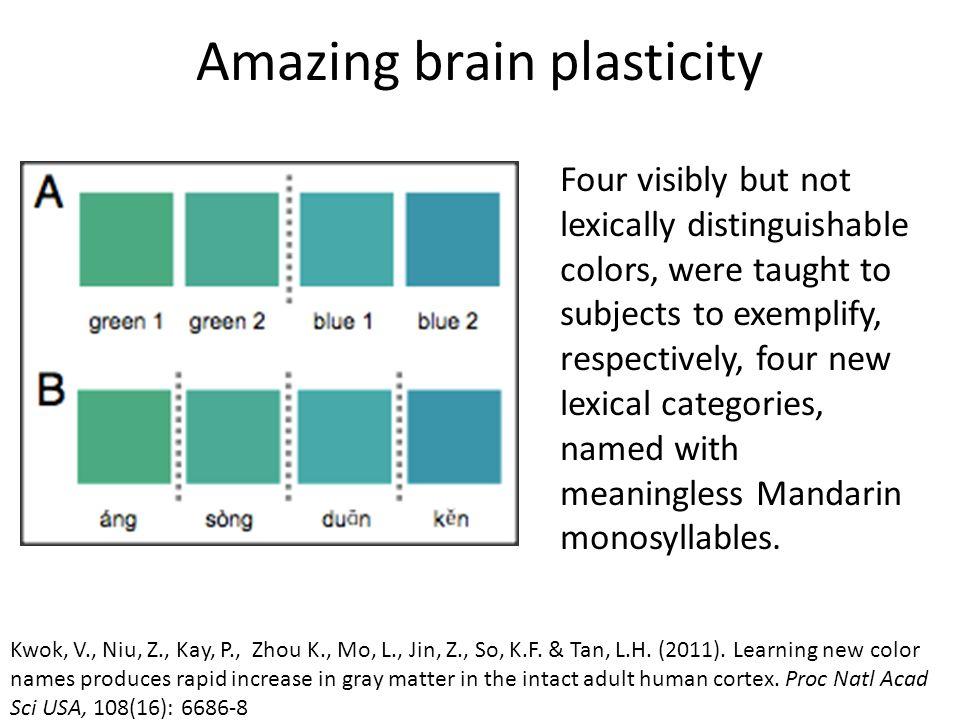 Amazing brain plasticity Kwok, V., Niu, Z., Kay, P., Zhou K., Mo, L., Jin, Z., So, K.F.