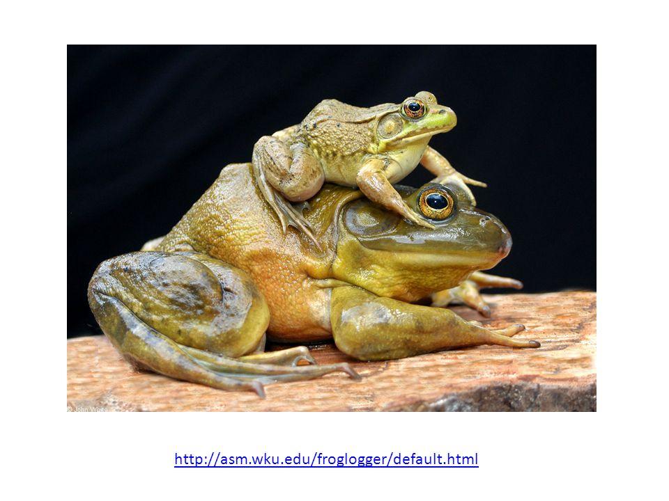http://asm.wku.edu/froglogger/default.html