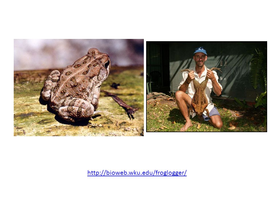 http://bioweb.wku.edu/froglogger/