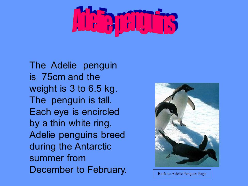 Emperor penguins lay there eggs in May. They also eat fish and squid. Back to Emperor Penguin Page