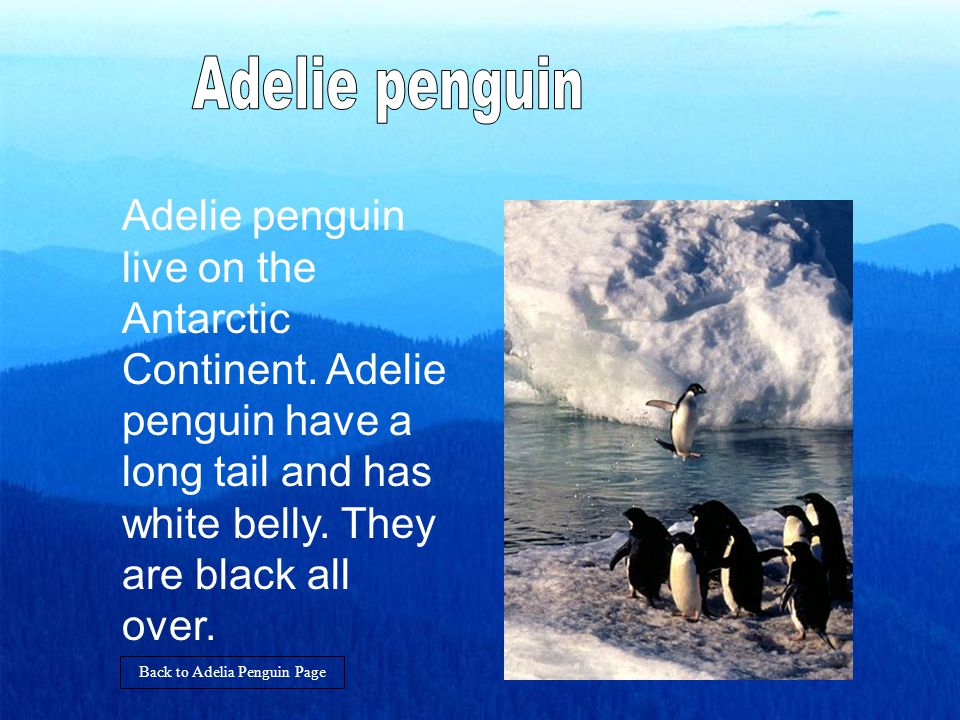 The Adelie penguin is 75cm and the weight is 3 to 6.5 kg.